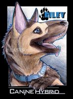 Riley the CanineHybrid con badge by BeastSoul