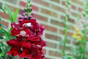 My Sister's Garden - red and green by radonvalley