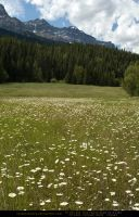 Mountain Meadow 5 by SalsolaStock
