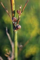 Snails by Kimberly-M
