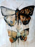 Entomology series: 1- MOTHS by patty123
