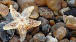 Starfish by My-Life-In-Pictures