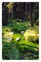 Forest stream by tomsumartin