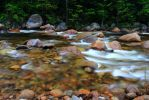 Stock: The only water in the forest is the river by Celem