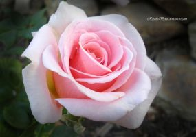 Pink Promise by RosalieBriar