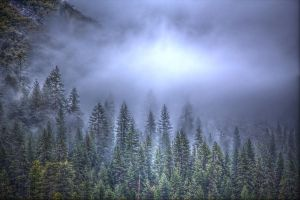 Trees in the Fog HDR by wrongpixel