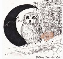 Northern Saw-Whet Owl by Devin-Marie