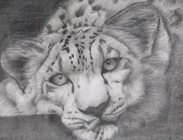 A cheetah by Anetteee