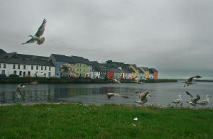 Galway seaguls by blessedchild