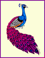 Pink and Purple Peacock by HollieBollie