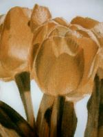 Plastic Tulips by lcksophie