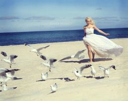 one of the gulls by fae-photography