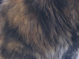 Textures: Fur 002 by VicariousStock