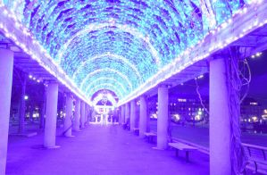 Lights for the Holidays In Boston, All In Blue by Miss-Tbones