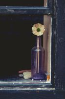 Bottle Flower in Window by jakelauer