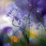 spring's jungle by prismes