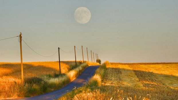 Golden Field at sunset with a Moon by manuelo-pro