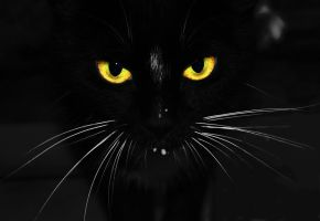 Black cat by Blue-Norway