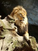 Hagenbeck 03 by TheScottishPlaid