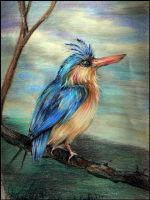 Malachite Kingfisher by scenceable