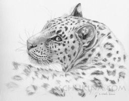 Leopard - Glance back by sschukina