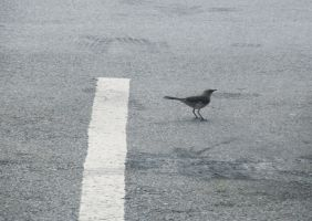 Bird In The Parking Lot III by WolfDagger369