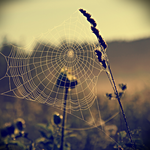 SeeThroughTheWeb? by airicalush