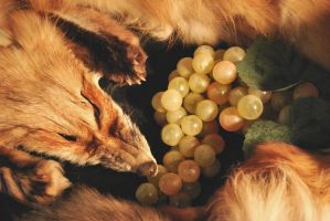The Fox and the Grapes by CindarellaPop