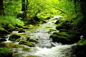 River in forest by ELBengelito