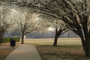 Place 12. Blooming Campus by MystStock