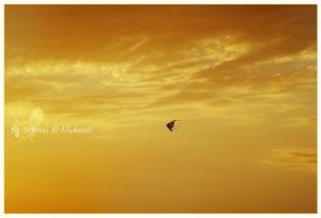 .. flying .. by HasanMHM