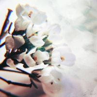 Tiny Flowers by NNarcissus