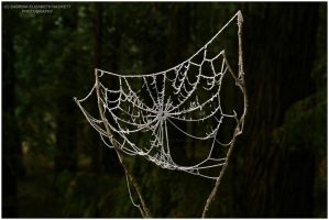 Frosted Web by Hitomii