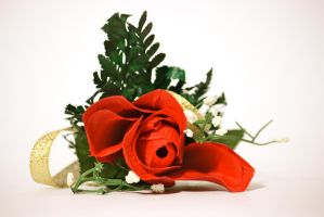 When girls wore corsage, the guys wore this rose by ren241295