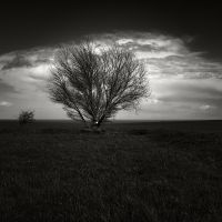 Two trees by pedroinacio