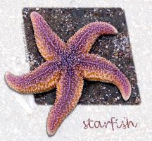 Starfish by WalkerGermany