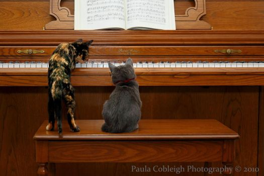 Let me show you how to play by La-Vita-a-Bella