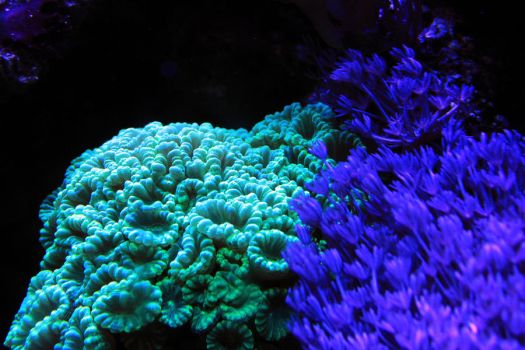 Corals 02 by Pagan-Stock