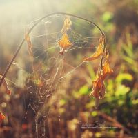They spun a web for me II by Silviaa92