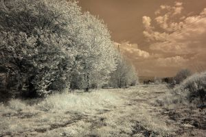 Infrared Suburbia. by cichutko