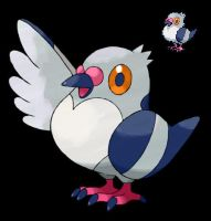 Pokemon 5G Shiny Pidove by etherspear