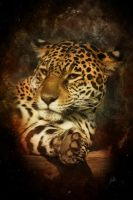 jaguar by greenfeed