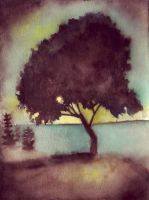 tree by shore by usartdude