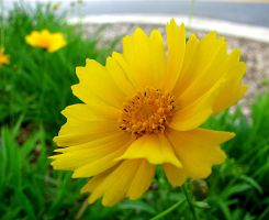 Yellow Flower by BakeryGirl-stock