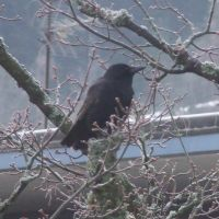 crow 3 by sacral-stock