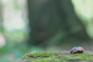 Moss with Acorn by pubculture