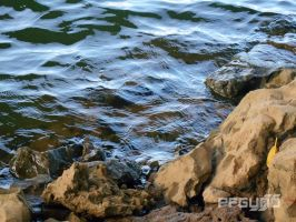 Water Meets The Rocks by pfgun0