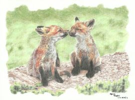 young foxes by schikaka