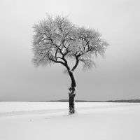 single tree by indojo