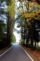 Tree line by creativecircle